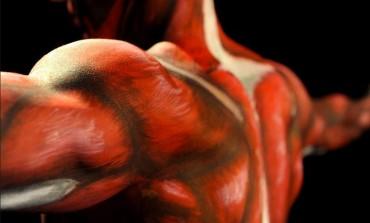 Анатомія м'язів людини.